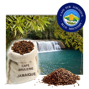Café Jamaïque | Blue Mountain - Pure origine 100% Arabica